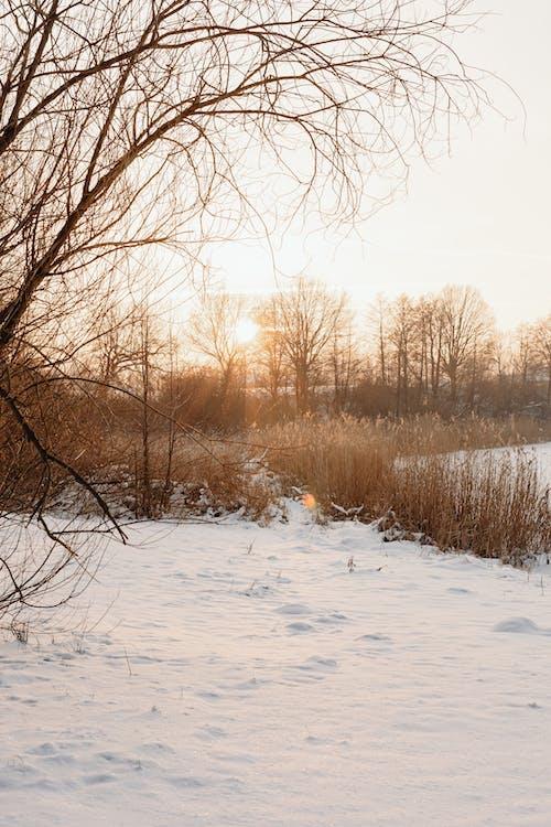 Imagine de stoc gratuită din anotimp, arbore, cădere, ceață