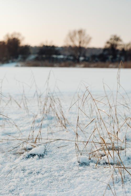 Imagine de stoc gratuită din apă, apă curgătoare, arbore, congelat