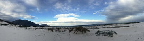 Free stock photo of beach, blue, bushes