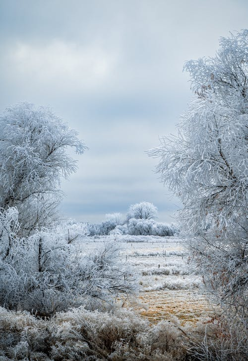 Snowy field with leafless trees covered with hoarfrost