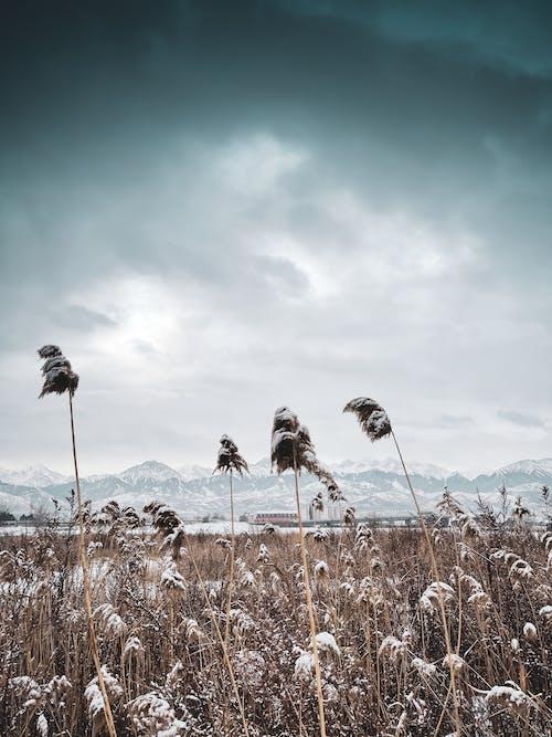 алатау, алматыапорт, естенерболの無料の写真素材