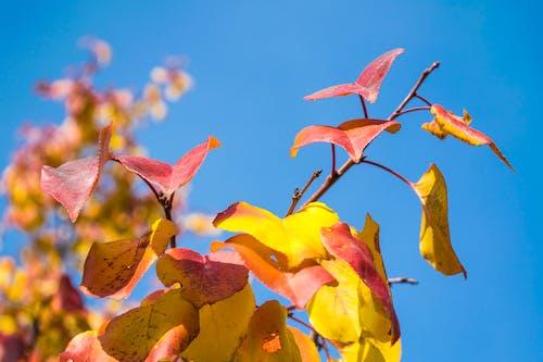Free stock photo of autumn leaf, pine leaves