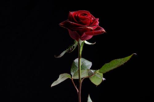 お祝い, デコレーション, バックグラウンド, バレンタイン・デーの無料の写真素材