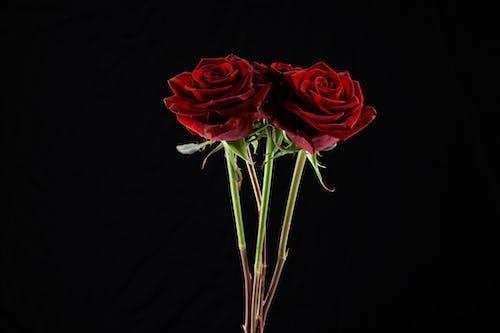 お祝い, デコレーション, バックグラウンド, バラの無料の写真素材