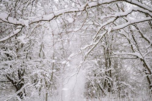 Foto d'estoc gratuïta de branques d'arbre, cobert, congelant