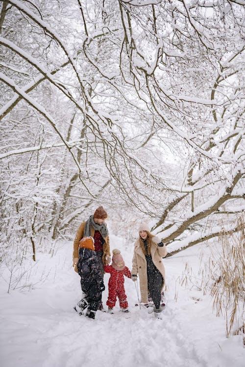 Foto d'estoc gratuïta de a l'aire lliure, branques d'arbre, caminant