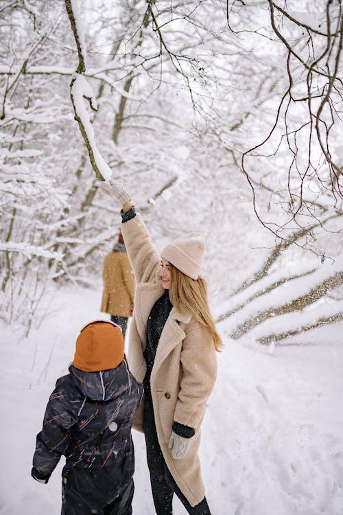 Foto d'estoc gratuïta de arribant, branca d'arbre, congelant