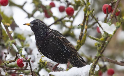 Black and Brown Bird on White Snow