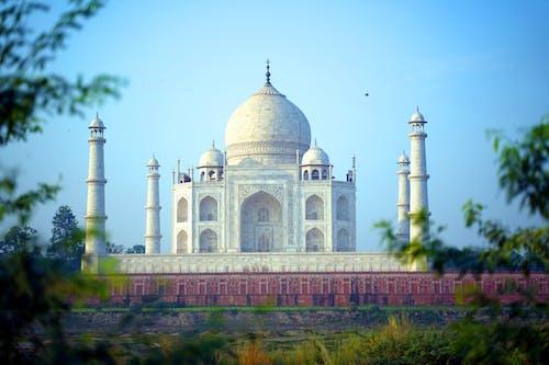 Amazing Taj Mahal through Tree Branches