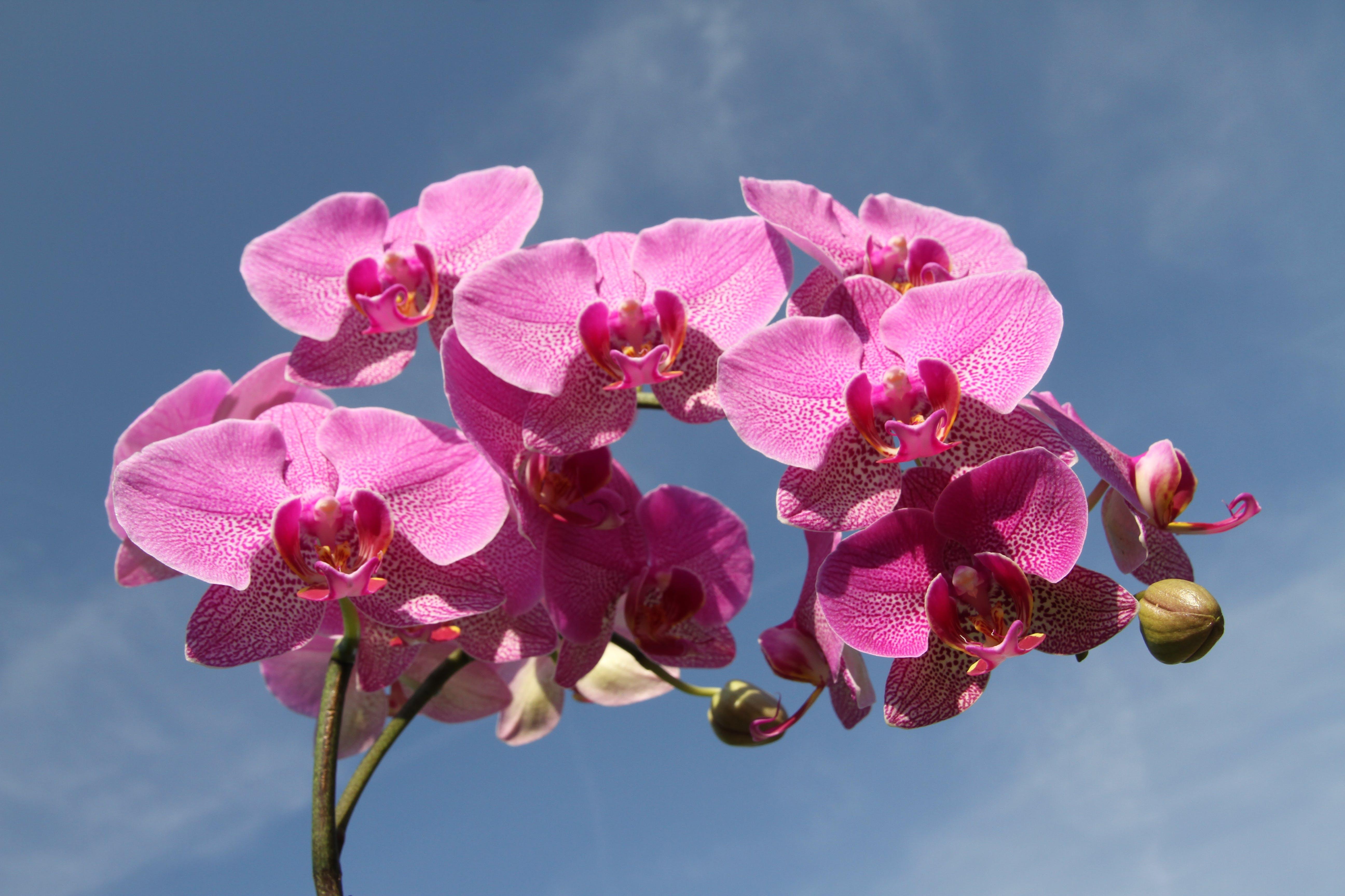 Fotos de stock gratuitas de botánica, flor, flora, floración
