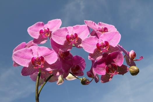 Little pink flowers free stock photo pink flower mightylinksfo