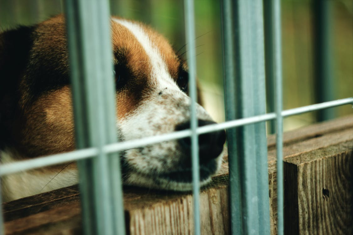 Free stock photo of animal shelter, dog