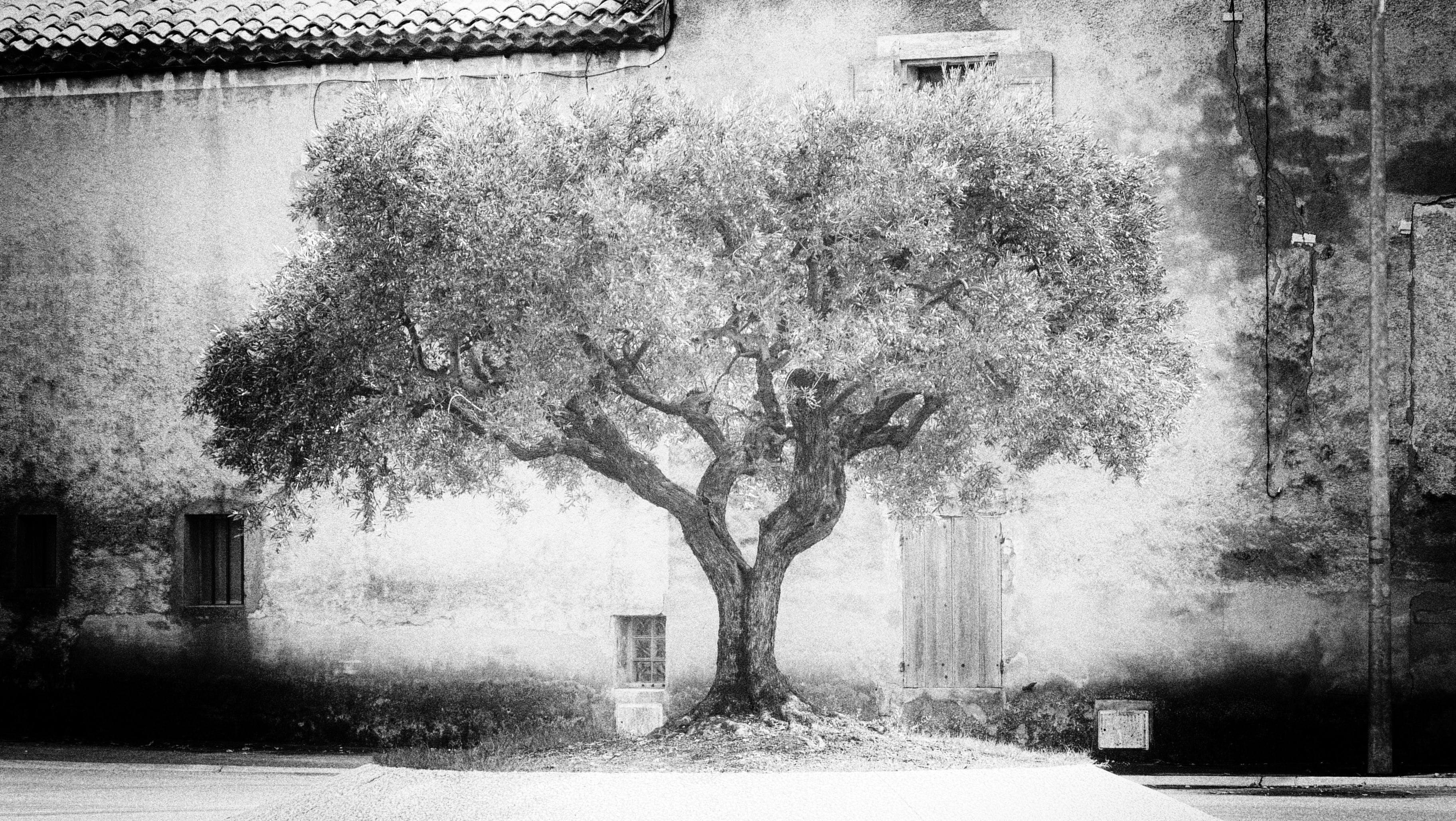 Free stock photo of arbre, black and white, monochrome, noir et blanc