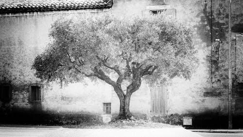 Free stock photo of arbre, black and white, monochrome