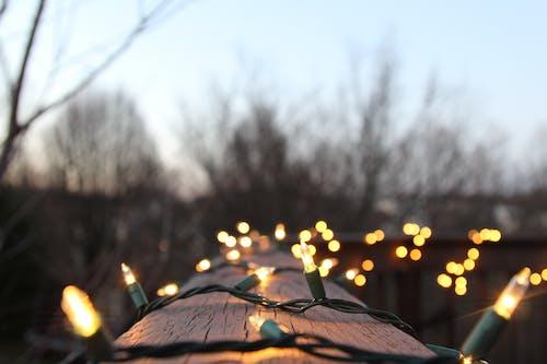 Darmowe zdjęcie z galerii z drzewa, niebo, ogniskować, światła
