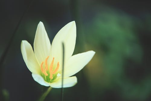 Fotos de stock gratuitas de disparos de flores, flor blanca, floral