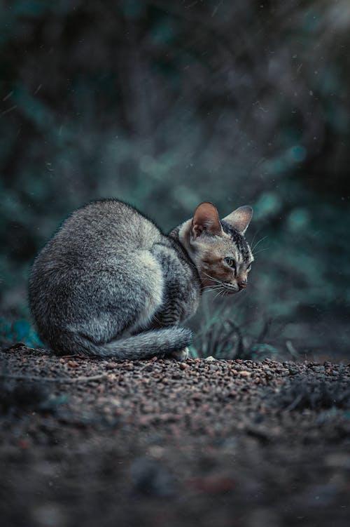 Brown Tabby Cat Lying on Ground