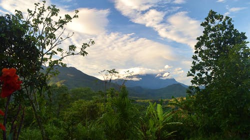Fotos de stock gratuitas de cielo, montaña, monte kinabulu, plantas