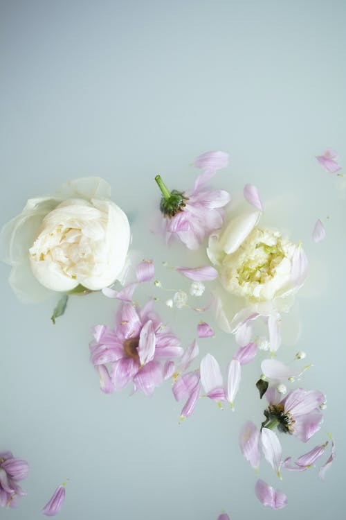 White and Purple Flowers on White Surface