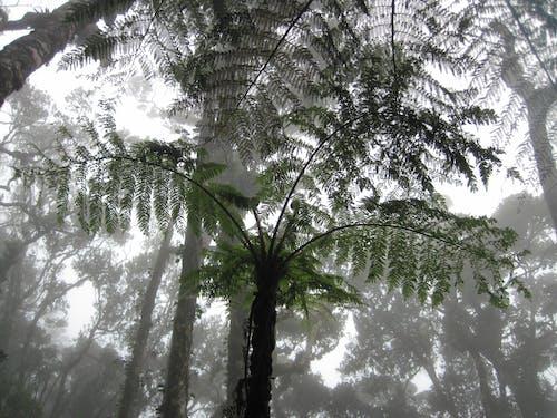 Fotos de stock gratuitas de helecho, jungla, neblina