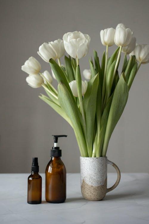 Foto d'estoc gratuïta de anti edat, aroma, aromàtic
