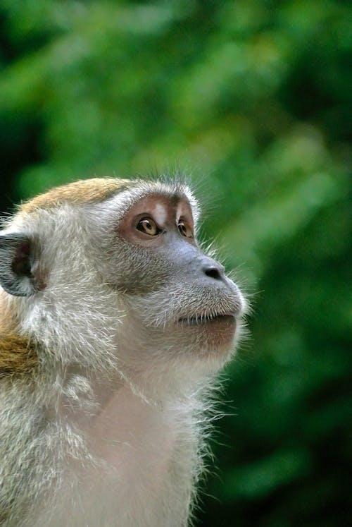 Základová fotografie zdarma na téma divoké zvíře, profil, zblízka, zvíře