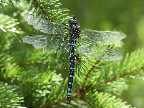 Kostenloses Stock Foto zu insekt, libelle, makro, nahansicht