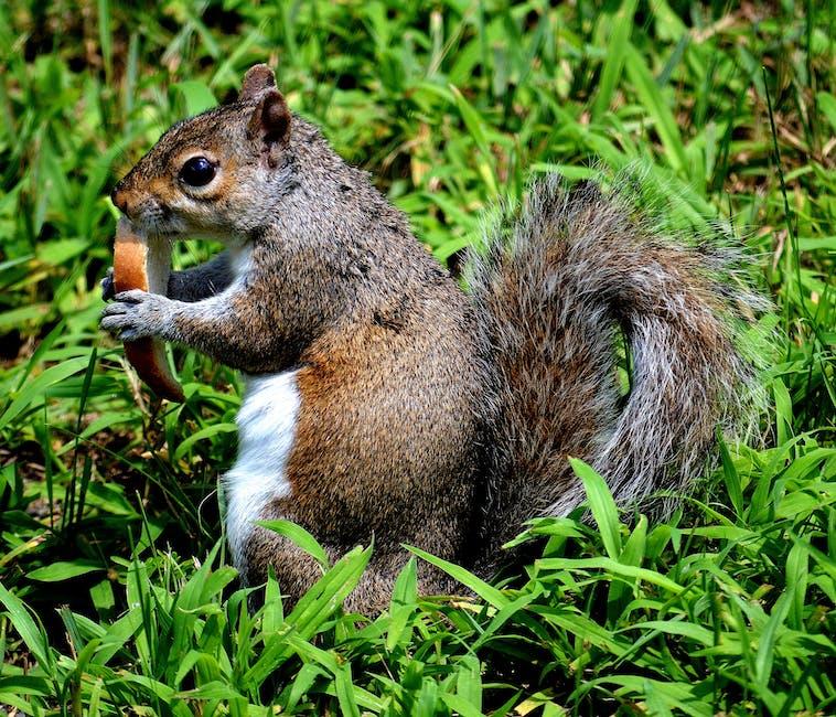 New free stock photo of nature, eating, animal