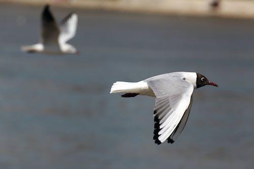 Makroschuss, Wenn Weißer Und Schwarzer Vogel