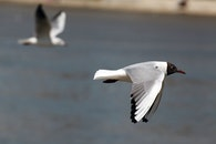 nature, bird, flying