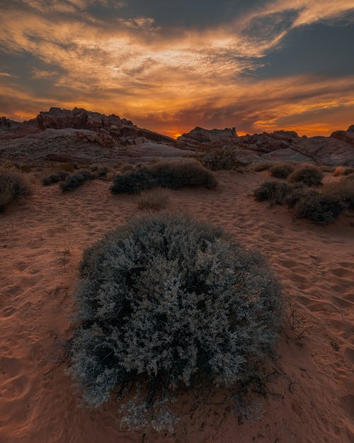 Green Grass on Brown Sand during Sunset