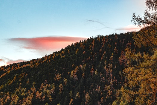 Aerial View of Forest during Sunset