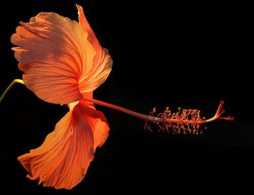 Gratis lagerfoto af blomst, delikat, farve, flora