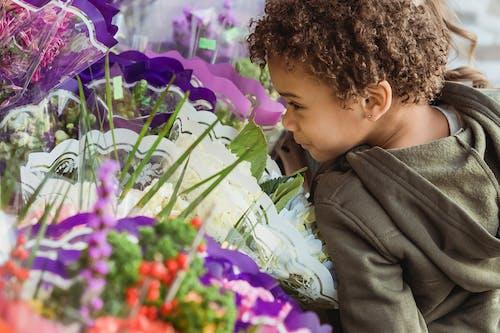 Immagine gratuita di adorabile, amichevole, aroma