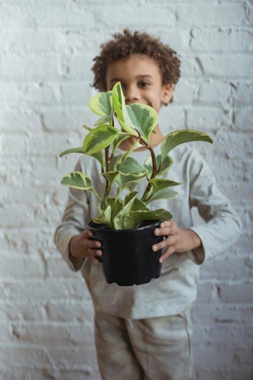 Бесплатное стоковое фото с афро-американский мальчик, беззаботный, ботаника