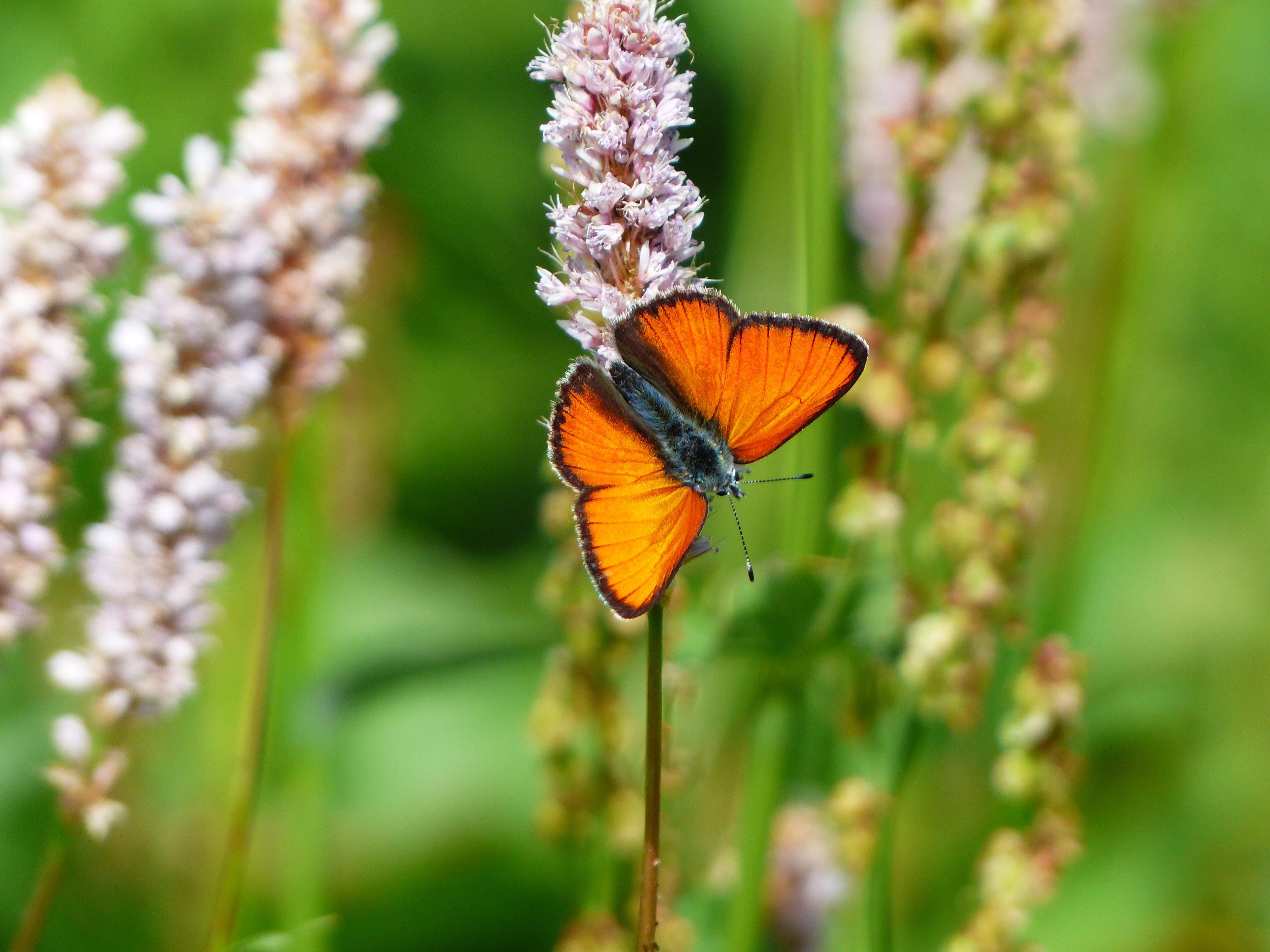 Brown Black Moth
