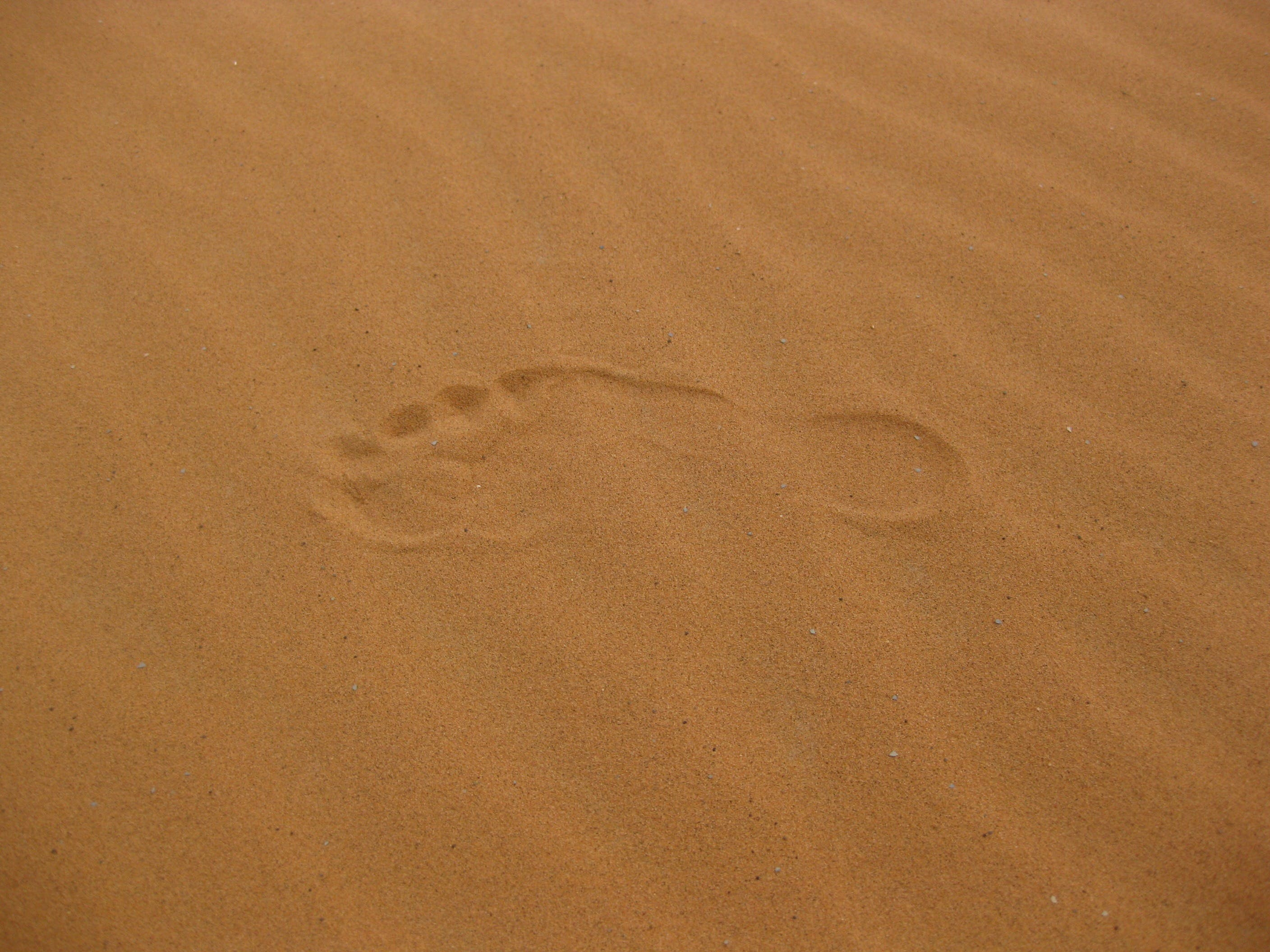 Single Foot Print on the Sand