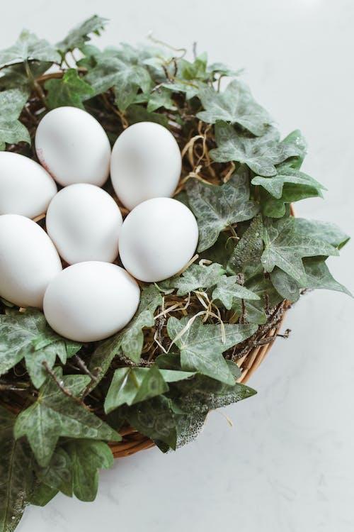 Gratis lagerfoto af æg, blad, blomst
