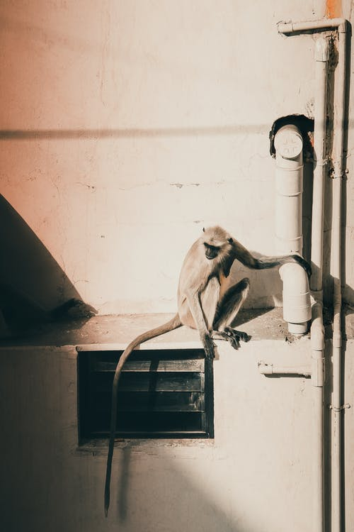 Monkey on White Pipe in Grayscale Photography