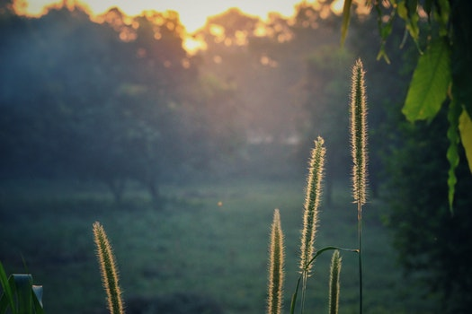 Green Plants during Sunrise