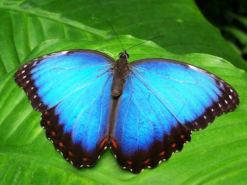 Ingyenes stockfotó közelkép, pillangó, rovar, természet témában