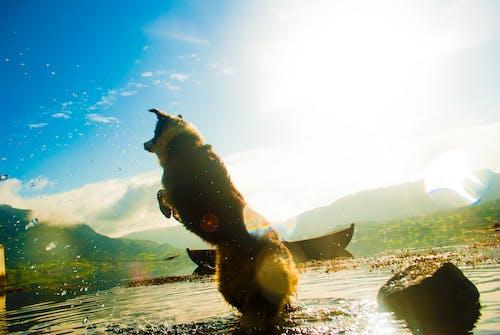 açık, atlamak, eğlence, hayvan içeren Ücretsiz stok fotoğraf