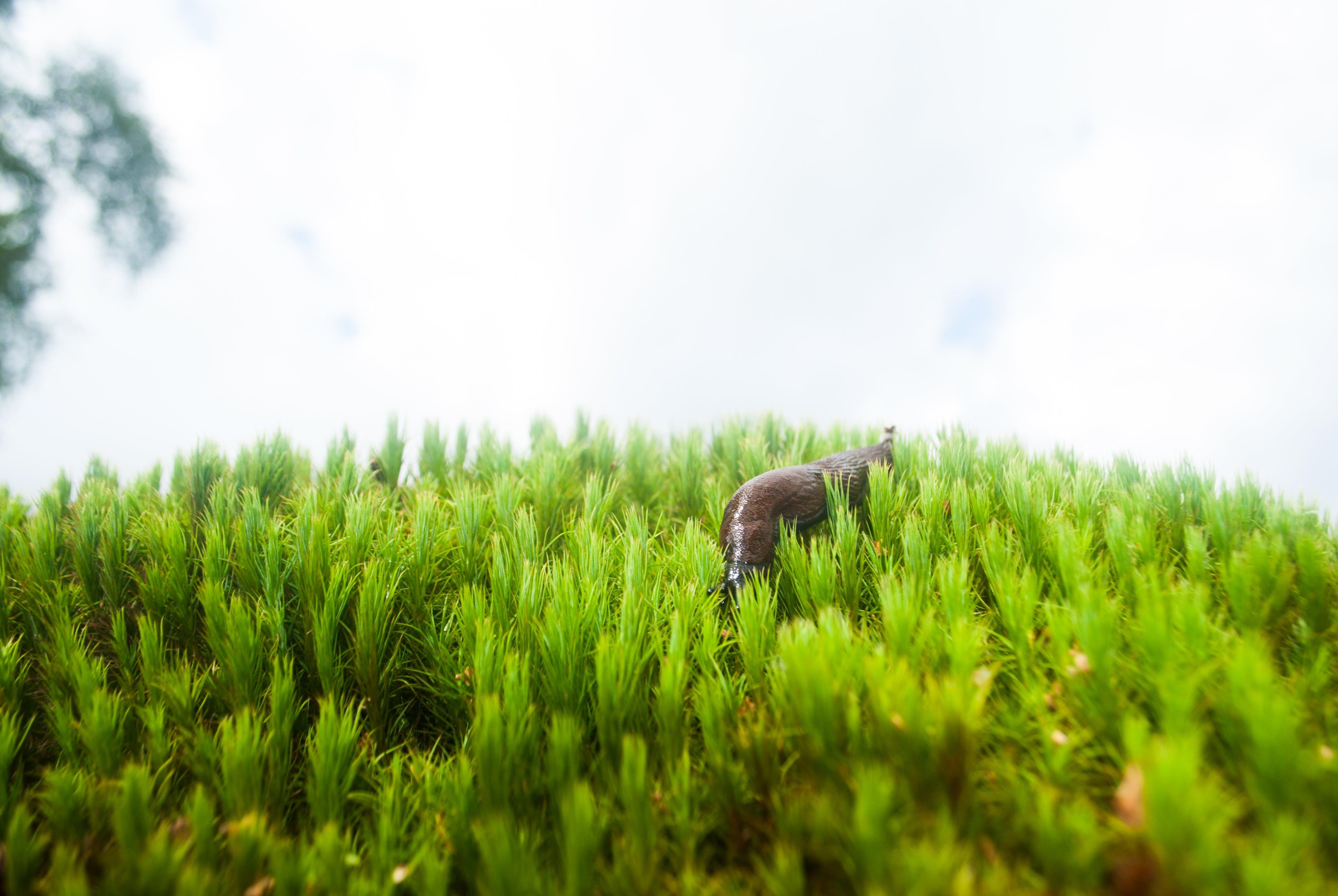 Gratis lagerfoto af græs, snegl