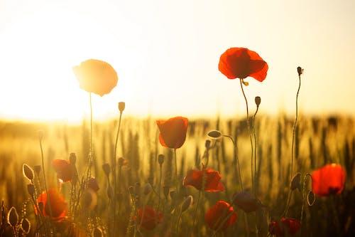 Fiore Rosso Vicino Al Fiore Bianco Durante Il Giorno
