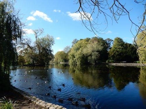 Free stock photo of lakeside, trees