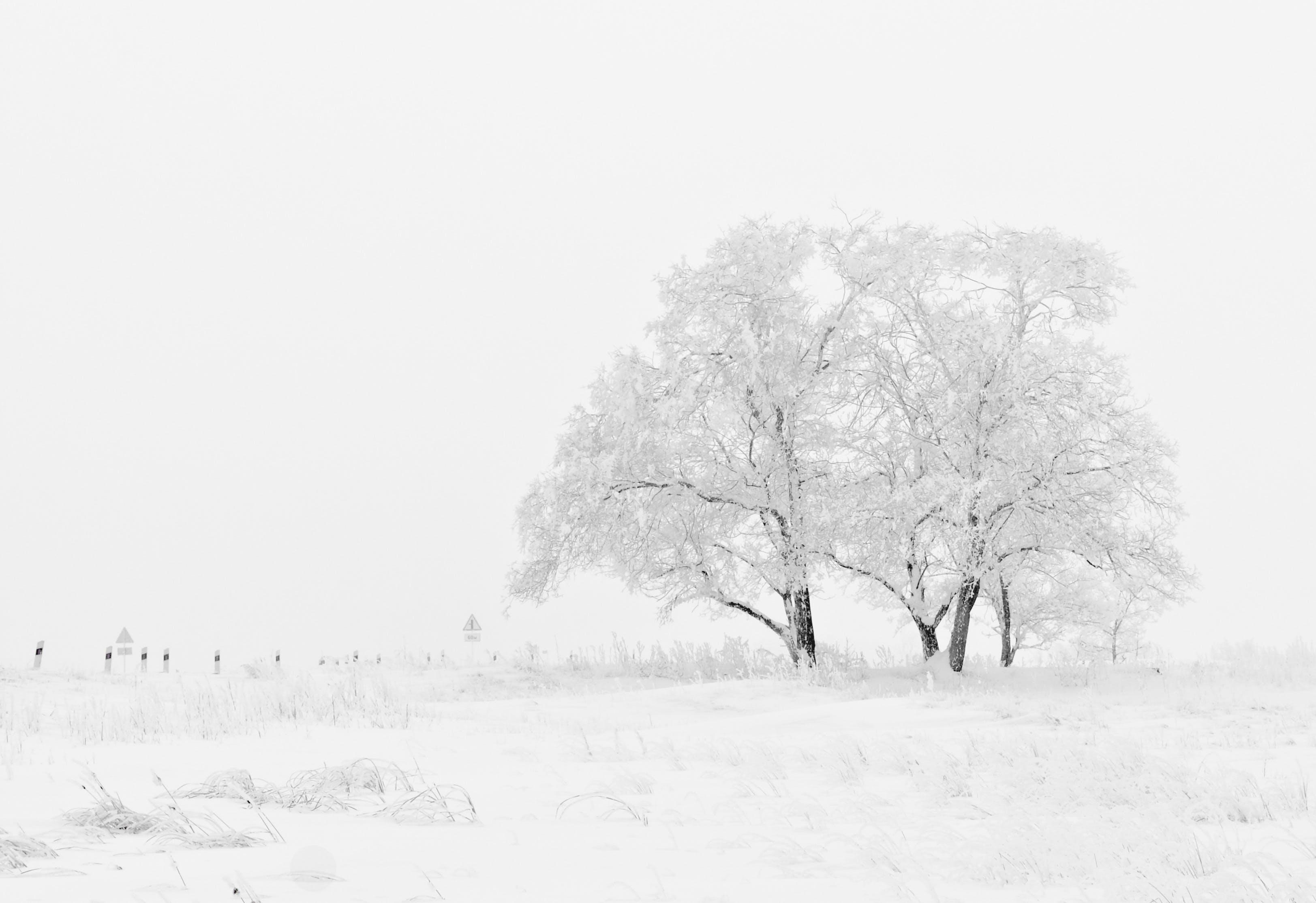 White and Black Tree Illustration