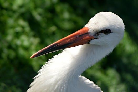 White Crane Bird · Free Stock Photo