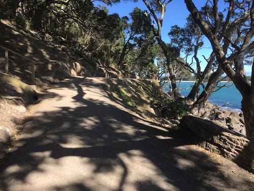 Free stock photo of mountainside, path, shade