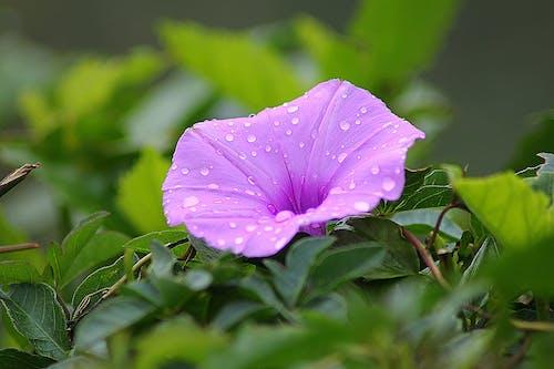 Gratis stockfoto met bladeren, bloeien, bloem, bloesem