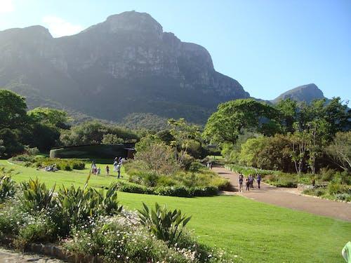 Free stock photo of botanical gardens, mountain gardens, mountainside